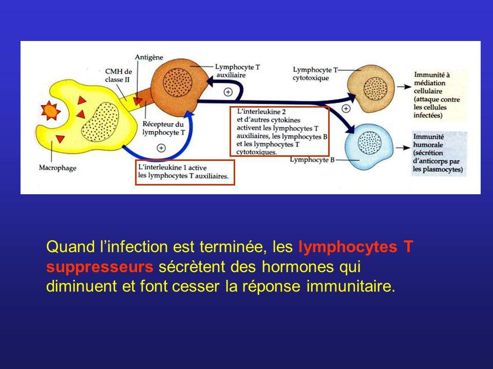 Quand linfection est terminée, les lymphocytes T suppresseurs sécrètent des hormones qui diminuent et font cesser la réponse immunitaire.
