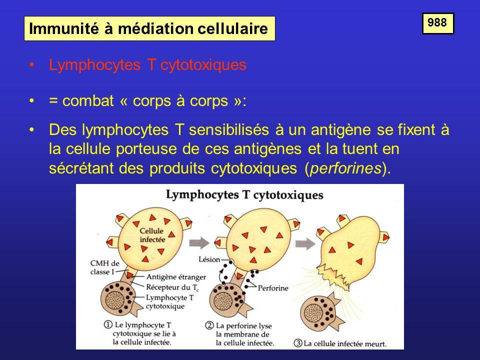 Immunité à médiation cellulaire = combat « corps à corps »: Des lymphocytes T sensibilisés à un antigène se fixent à la cellule porteuse de ces antigè