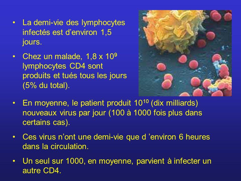 La demi-vie des lymphocytes infectés est denviron 1,5 jours. Chez un malade, 1,8 x 10 9 lymphocytes CD4 sont produits et tués tous les jours (5% du to