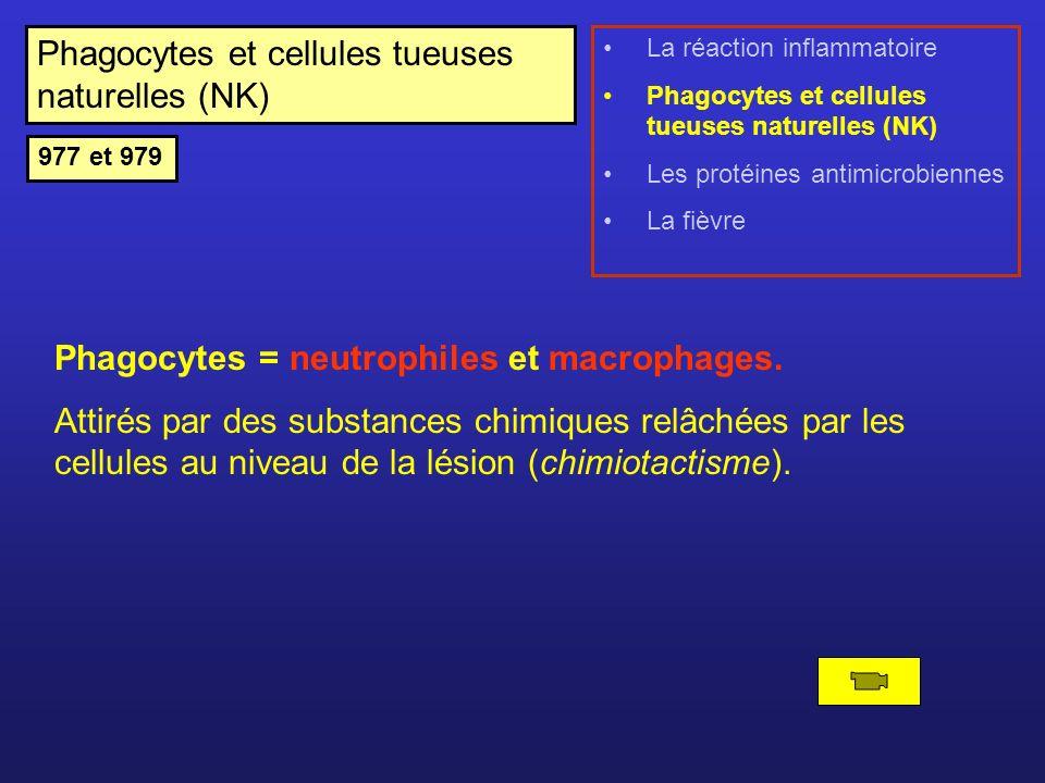 Phagocytes et cellules tueuses naturelles (NK) Phagocytes = neutrophiles et macrophages. Attirés par des substances chimiques relâchées par les cellul