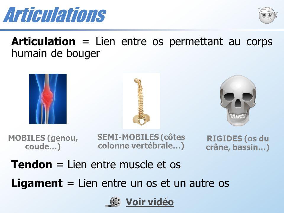 Articulation = Lien entre os permettant au corps humain de bouger Tendon = Lien entre muscle et os Ligament = Lien entre un os et un autre os MOBILES