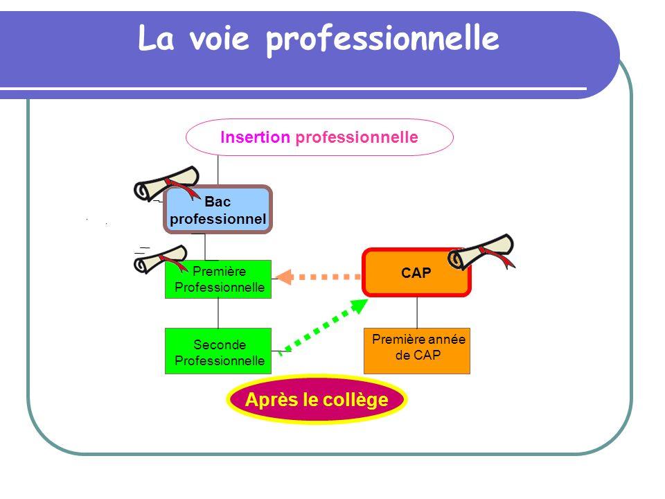 Insertion professionnelle Après le collège Bac professionnel CAP La voie professionnelle Seconde Professionnelle Première Professionnelle Première ann