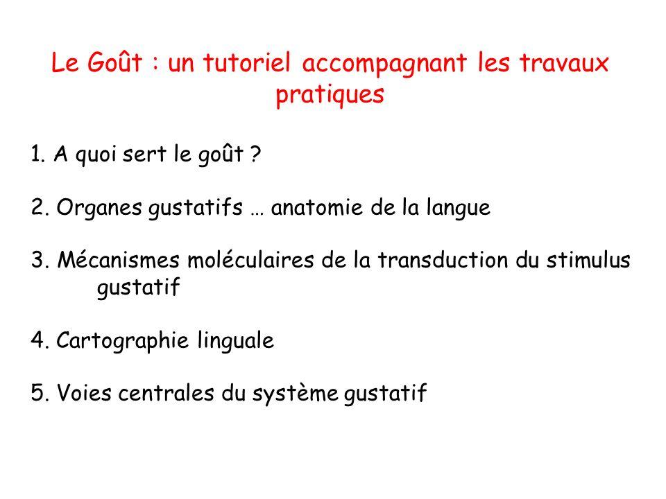 Le Goût : un tutoriel accompagnant les travaux pratiques 1.