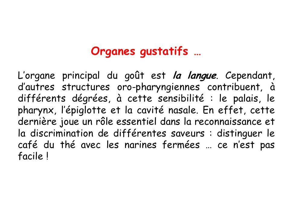 Organes gustatifs … Lorgane principal du goût est la langue.