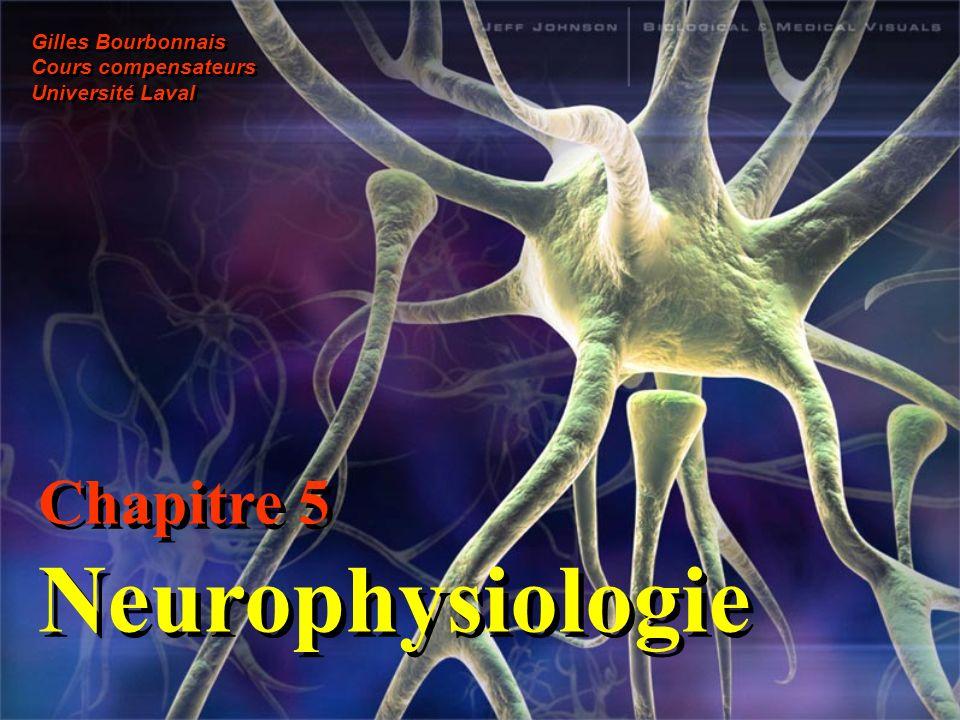 Chapitre 5 Neurophysiologie Gilles Bourbonnais Cours compensateurs Université Laval