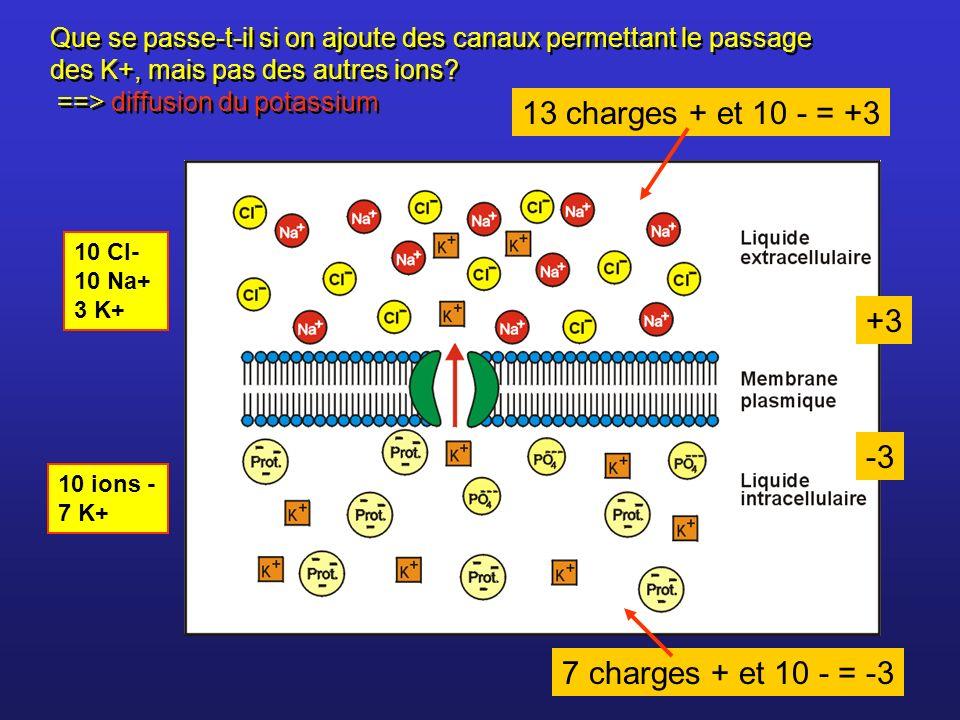 Le K+ cherche à diffuser en suivant son gradient de concentration Le K+ est attiré par les charges - de l intérieur et repoussé par les charges + de l extérieur La diffusion ne se fera pas jusquà équilibre des concentrations du K + Le gradient électrique qui se forme arrête la diffusion.