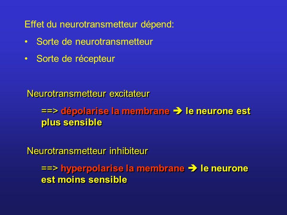 Chaque neurone reçoit des terminaisons excitatrices et des terminaisons inhibitrices Ex.