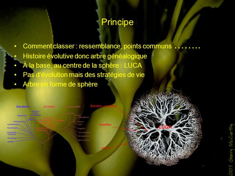 Principe Comment classer : ressemblance, points communs …….. Histoire évolutive donc arbre généalogique À la base, au centre de la sphère : LUCA Pas d