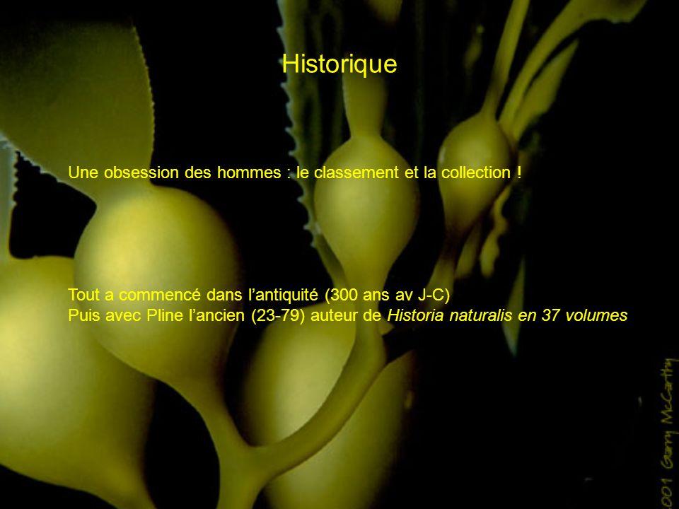 Historique Une obsession des hommes : le classement et la collection ! Tout a commencé dans lantiquité (300 ans av J-C) Puis avec Pline lancien (23-79