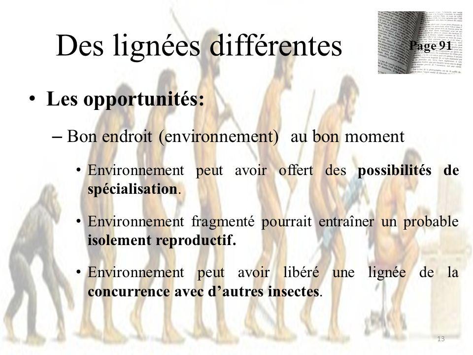 Des lignées différentes Les opportunités: – Bon endroit (environnement) au bon moment Environnement peut avoir offert des possibilités de spécialisation.