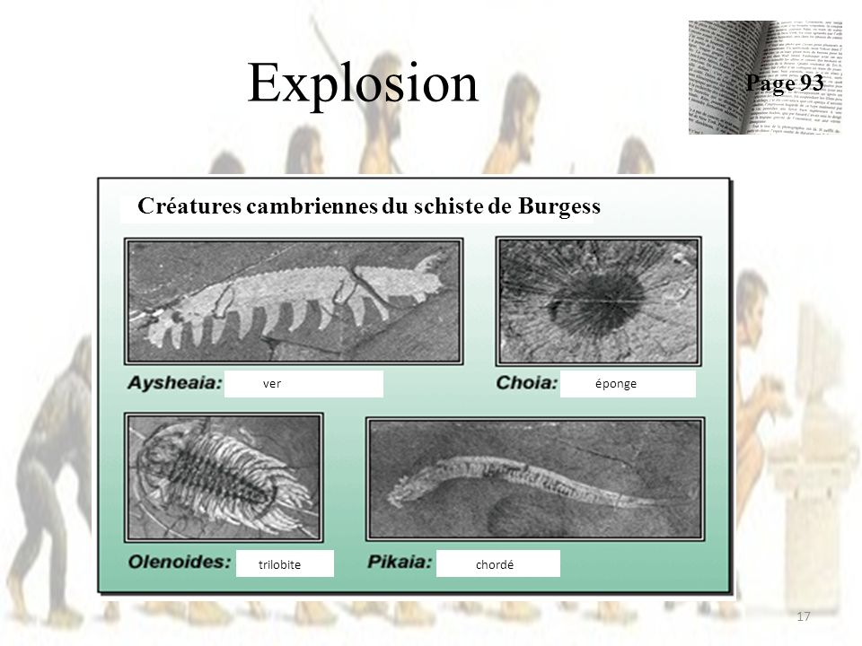 Explosion 17 Page 93 Créatures cambriennes du schiste de Burgess veréponge trilobite chordé