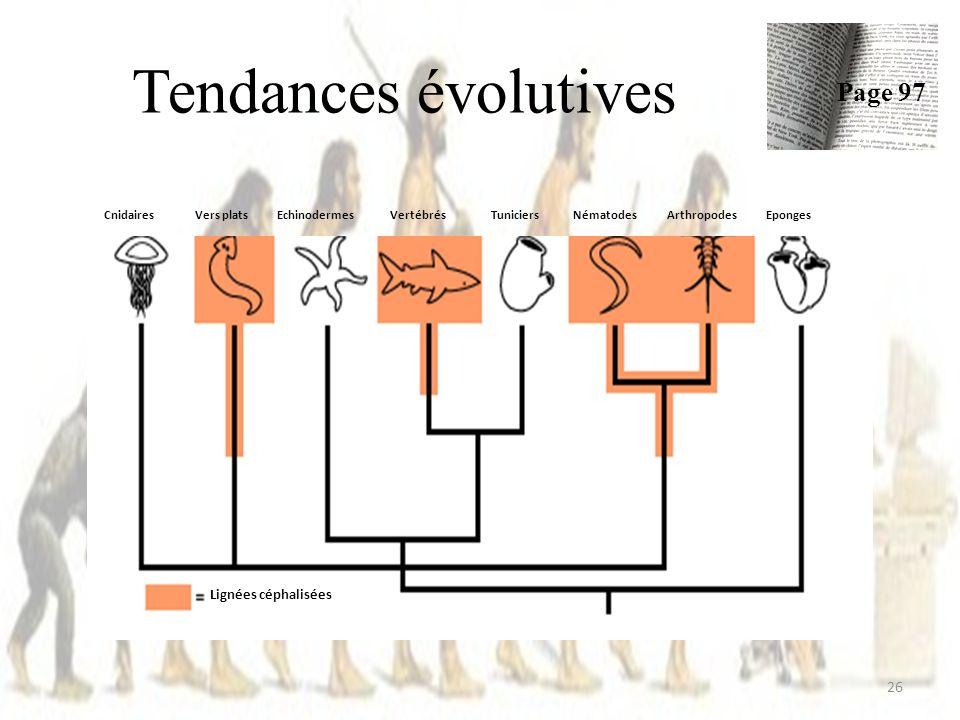 Tendances évolutives 26 Page 97 Lignées céphalisées CnidairesVers platsEchinodermesVertébrésTuniciersNématodesArthropodesEponges