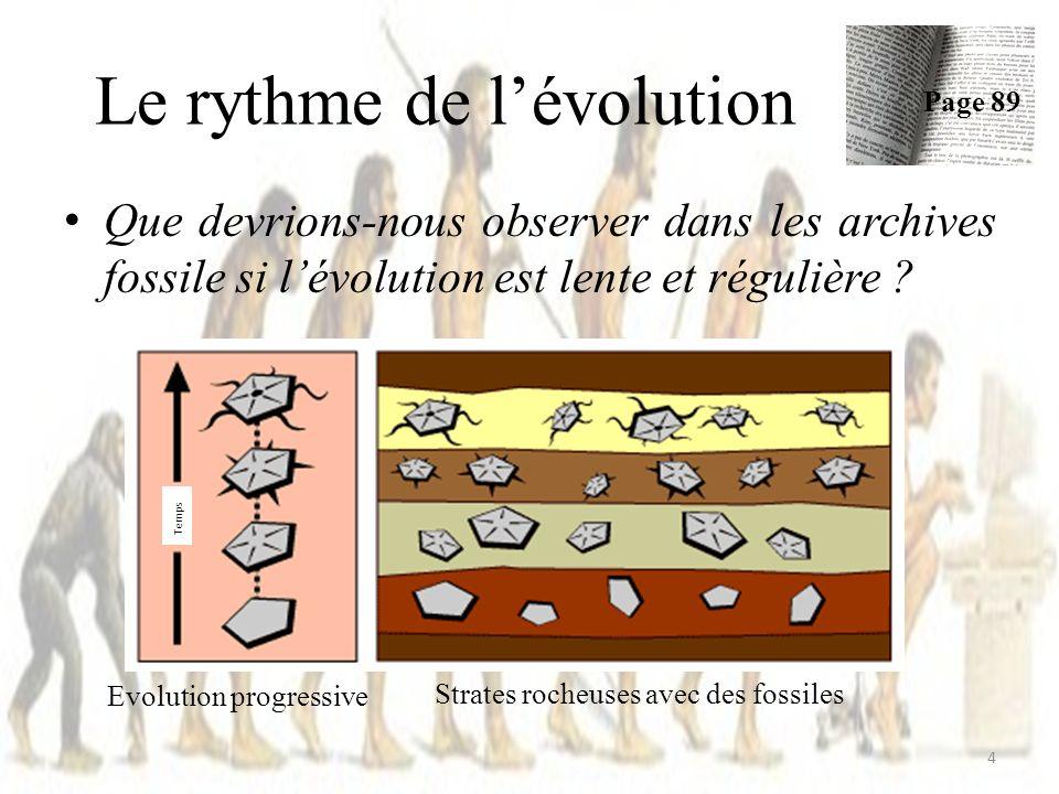 Le rythme de lévolution Que devrions-nous observer dans les archives fossile si lévolution est lente et régulière .