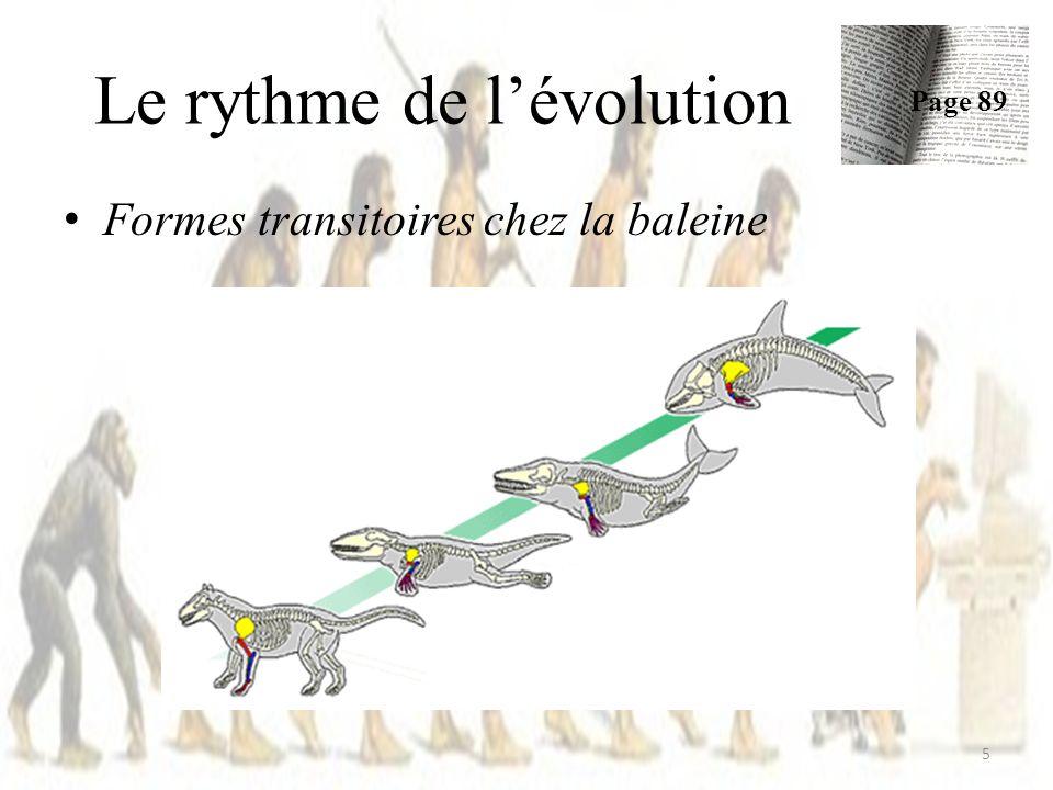 Le rythme de lévolution Formes transitoires chez la baleine 5 Page 89