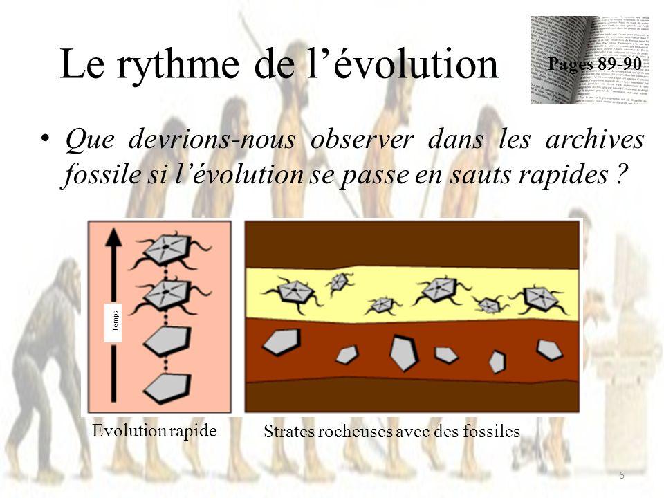 Le rythme de lévolution Que devrions-nous observer dans les archives fossile si lévolution se passe en sauts rapides .