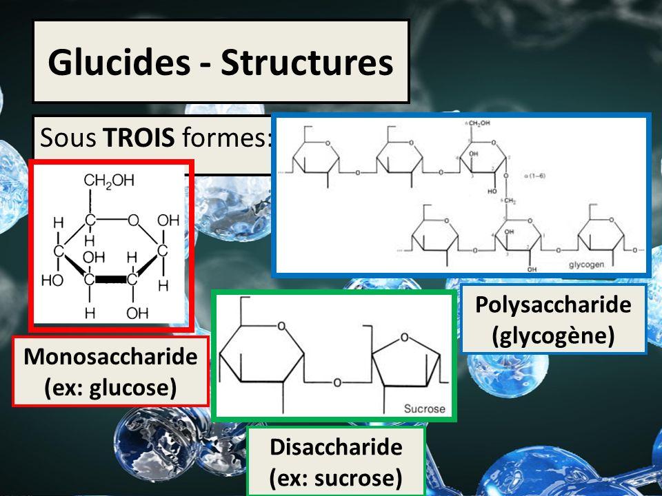 Glucides - Structures Sous TROIS formes: Monosaccharide (ex: glucose) Disaccharide (ex: sucrose) Polysaccharide (glycogène)