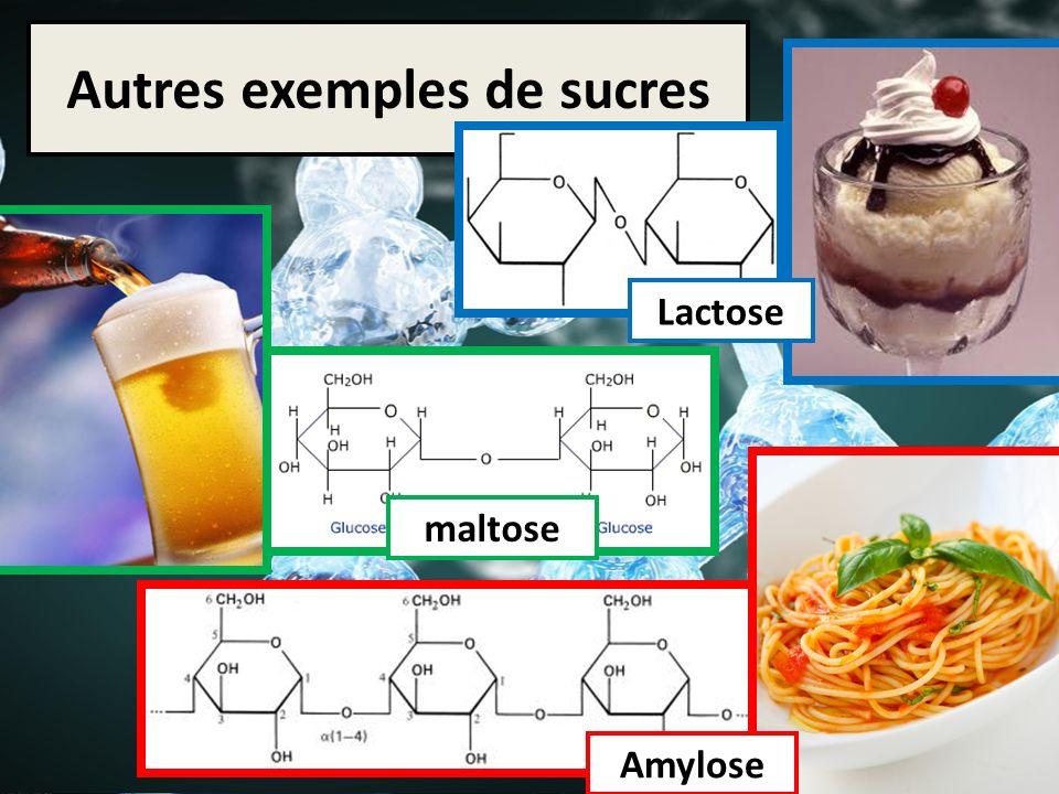 Autres exemples de sucres maltose Amylose Lactose