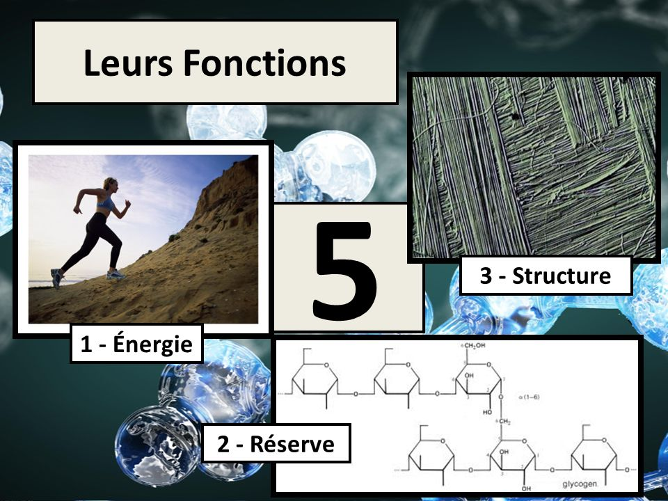 Leurs Fonctions 5 3 - Structure 2 - Réserve 1 - Énergie