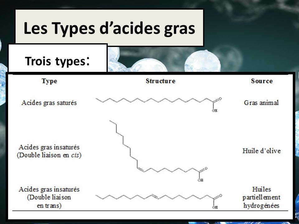 Les Types dacides gras Trois types :