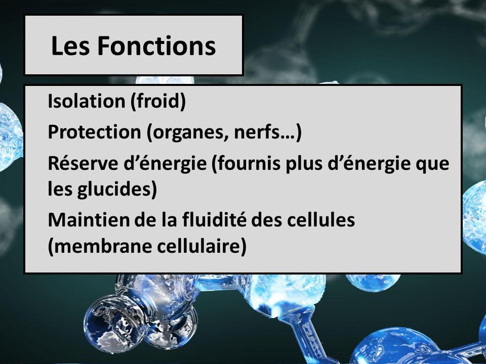 Les Fonctions Isolation (froid) Protection (organes, nerfs…) Réserve dénergie (fournis plus dénergie que les glucides) Maintien de la fluidité des cel