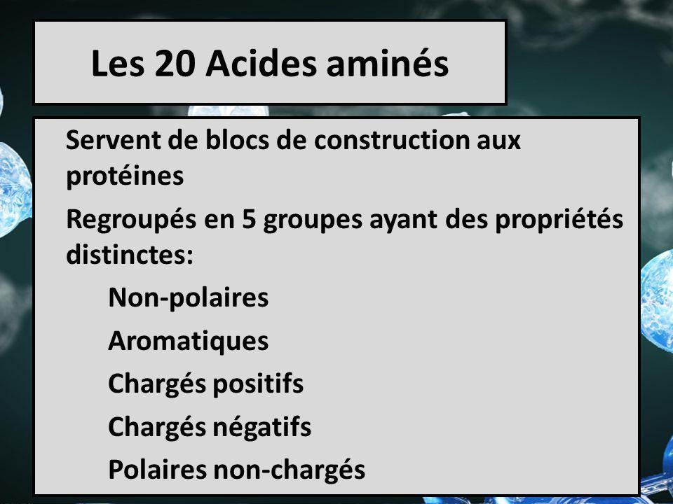 Les 20 Acides aminés Servent de blocs de construction aux protéines Regroupés en 5 groupes ayant des propriétés distinctes: Non-polaires Aromatiques C