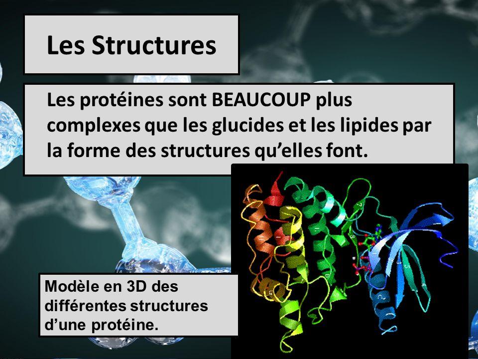 Les Structures Les protéines sont BEAUCOUP plus complexes que les glucides et les lipides par la forme des structures quelles font. Modèle en 3D des d
