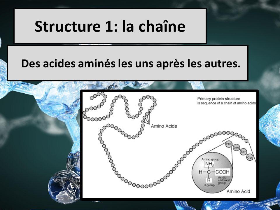 Structure 1: la chaîne Des acides aminés les uns après les autres.
