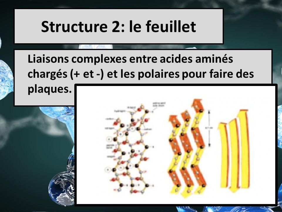 Structure 2: le feuillet Liaisons complexes entre acides aminés chargés (+ et -) et les polaires pour faire des plaques.
