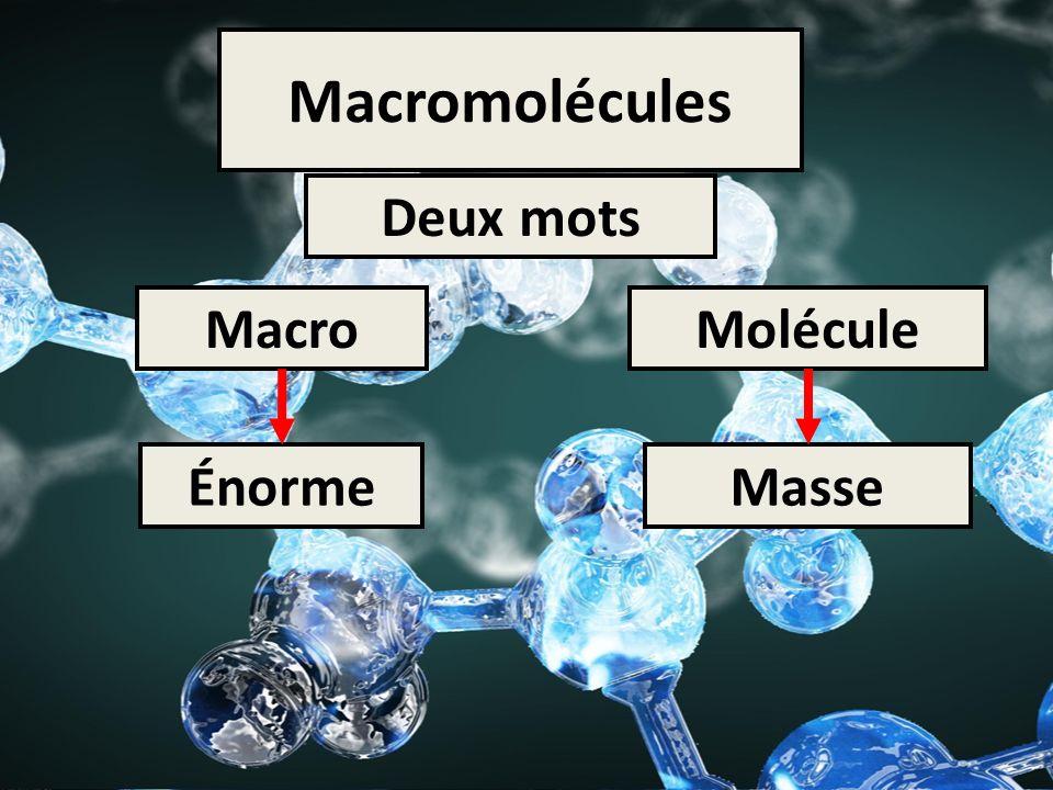 Macromolécules Deux mots MacroMolécule ÉnormeMasse