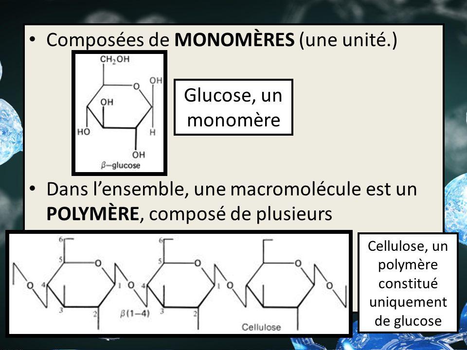Composées de MONOMÈRES (une unité.) Dans lensemble, une macromolécule est un POLYMÈRE, composé de plusieurs monomères. Glucose, un monomère Cellulose,