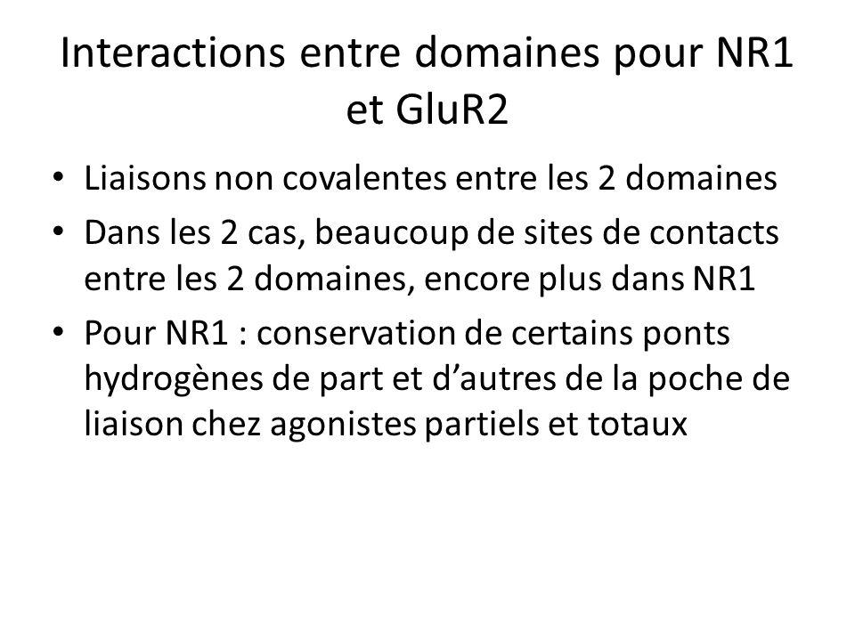 Interactions entre domaines pour NR1 et GluR2 Liaisons non covalentes entre les 2 domaines Dans les 2 cas, beaucoup de sites de contacts entre les 2 domaines, encore plus dans NR1 Pour NR1 : conservation de certains ponts hydrogènes de part et dautres de la poche de liaison chez agonistes partiels et totaux