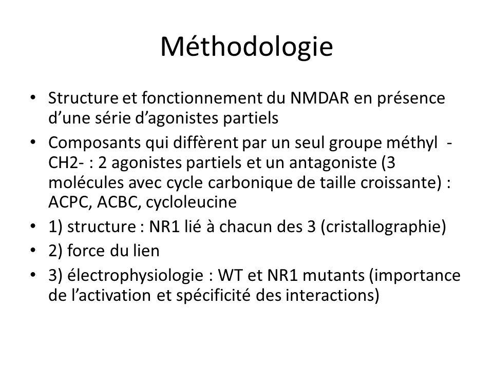 Méthodologie Structure et fonctionnement du NMDAR en présence dune série dagonistes partiels Composants qui diffèrent par un seul groupe méthyl - CH2- : 2 agonistes partiels et un antagoniste (3 molécules avec cycle carbonique de taille croissante) : ACPC, ACBC, cycloleucine 1) structure : NR1 lié à chacun des 3 (cristallographie) 2) force du lien 3) électrophysiologie : WT et NR1 mutants (importance de lactivation et spécificité des interactions)