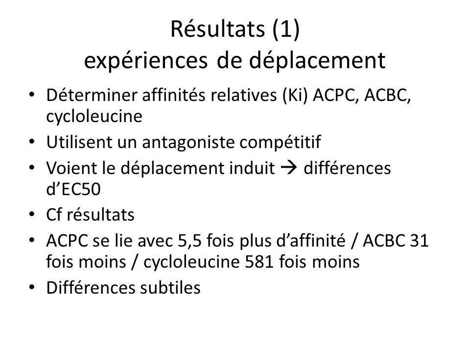 Résultats (1) expériences de déplacement Déterminer affinités relatives (Ki) ACPC, ACBC, cycloleucine Utilisent un antagoniste compétitif Voient le déplacement induit différences dEC50 Cf résultats ACPC se lie avec 5,5 fois plus daffinité / ACBC 31 fois moins / cycloleucine 581 fois moins Différences subtiles