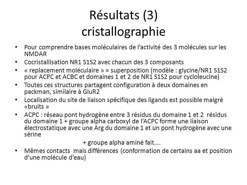 Résultats (3) cristallographie Pour comprendre bases moléculaires de lactivité des 3 molécules sur les NMDAR Cocristallisation NR1 S1S2 avec chacun des 3 composants « replacement moléculaire » = superposition (modèle : glycine/NR1 S1S2 pour ACPC et ACBC et domaines 1 et 2 de NR1 S1S2 pour cycloleucine) Toutes ces structures partagent configuration à deux domaines en packman, similaire à GluR2 Localisation du site de liaison spécifique des ligands est possible malgré «bruits » ACPC : réseau pont hydrogène entre 3 résidus du domaine 1 et 2 résidus du domaine 1 + groupe alpha carboxyl de lACPC forme une liaison électrostatique avec une Arg du domaine 1 et un pont hydrogène avec une sérine + groupe alpha aminé fait….