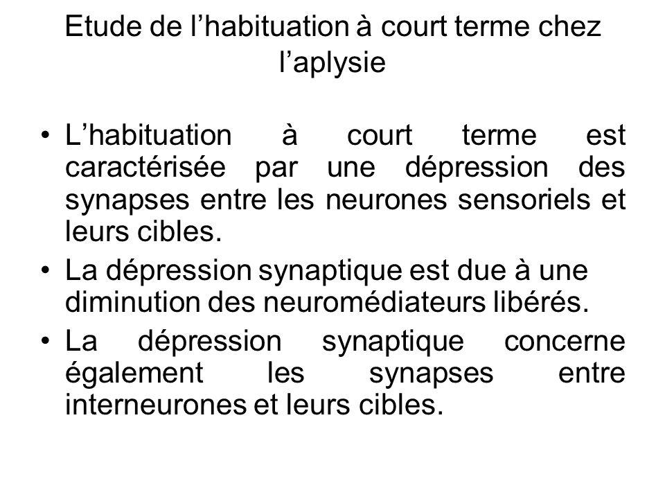 Etude de lhabituation à court terme chez laplysie Lhabituation à court terme est caractérisée par une dépression des synapses entre les neurones senso