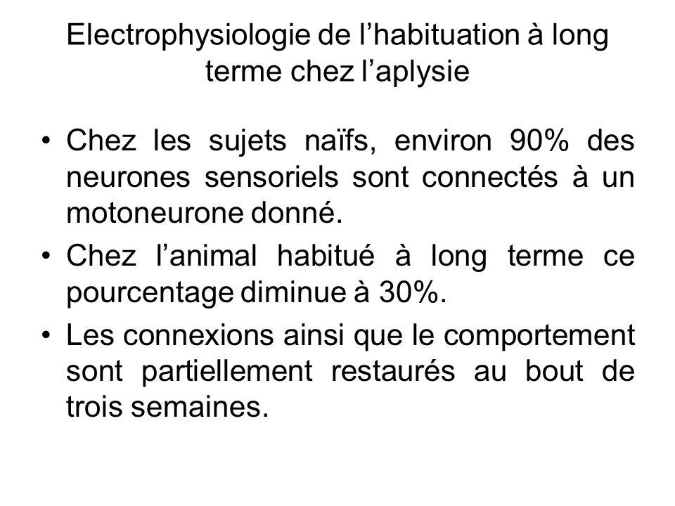 Chez les sujets naïfs, environ 90% des neurones sensoriels sont connectés à un motoneurone donné. Chez lanimal habitué à long terme ce pourcentage dim
