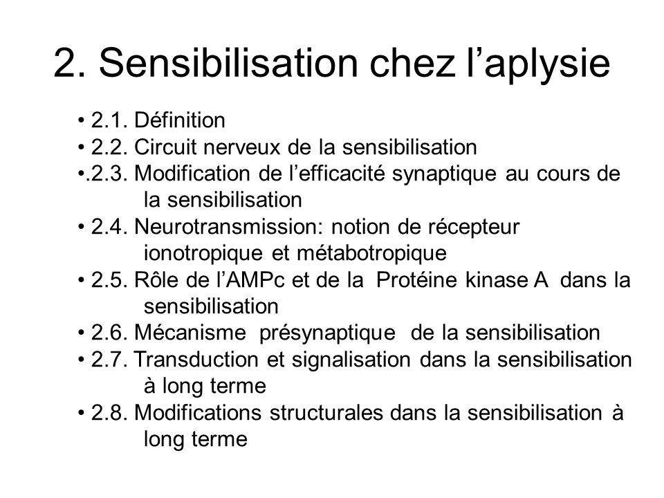 2. Sensibilisation chez laplysie 2.1. Définition 2.2. Circuit nerveux de la sensibilisation.2.3. Modification de lefficacité synaptique au cours de la