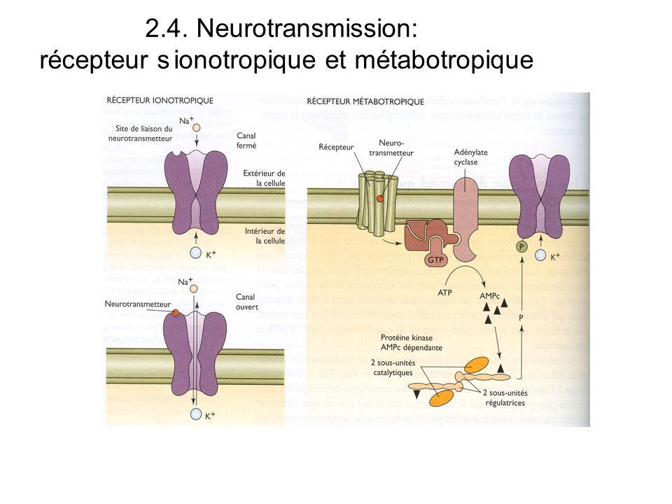 2.4. Neurotransmission: récepteur sionotropique et métabotropique