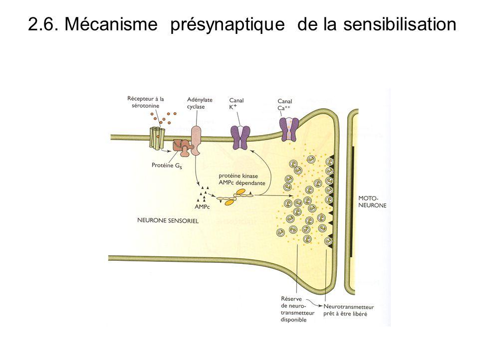 2.6. Mécanisme présynaptique de la sensibilisation