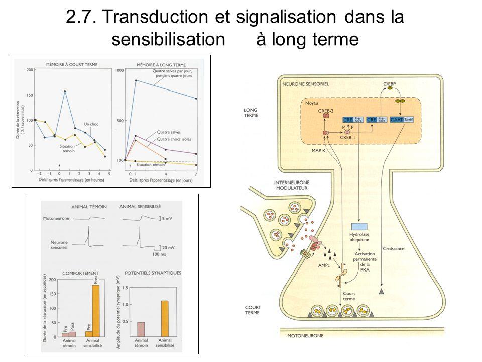 2.7. Transduction et signalisation dans la sensibilisation à long terme
