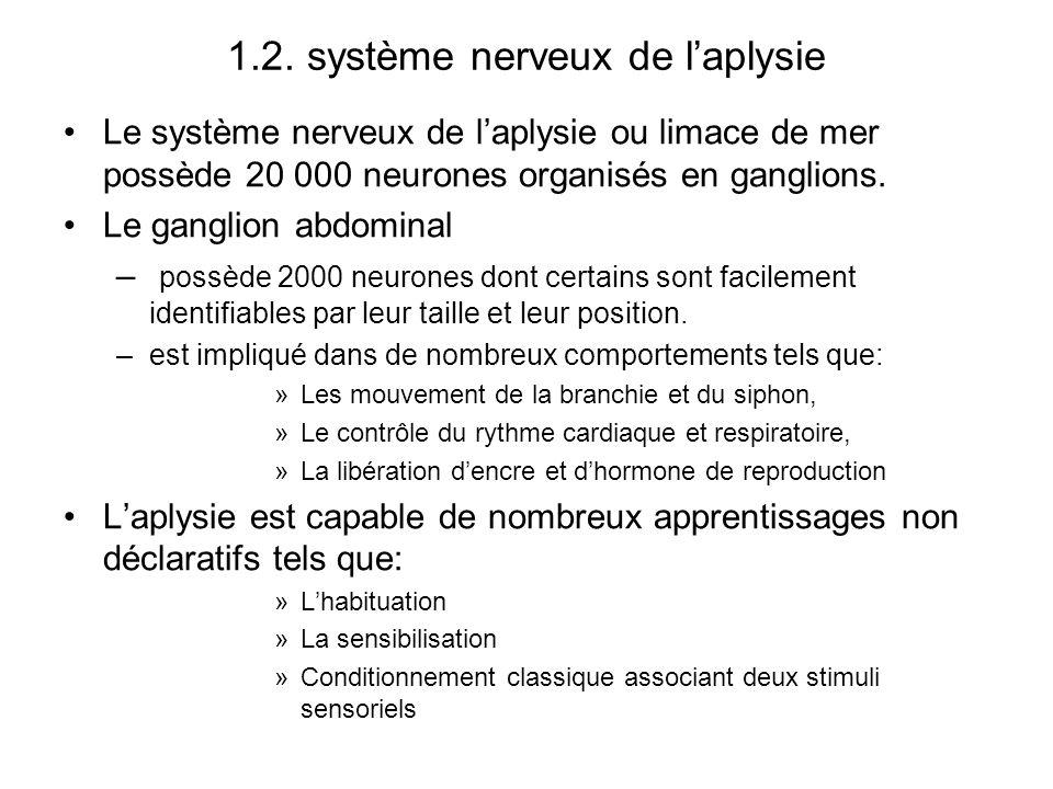 1.2. système nerveux de laplysie Le système nerveux de laplysie ou limace de mer possède 20 000 neurones organisés en ganglions. Le ganglion abdominal