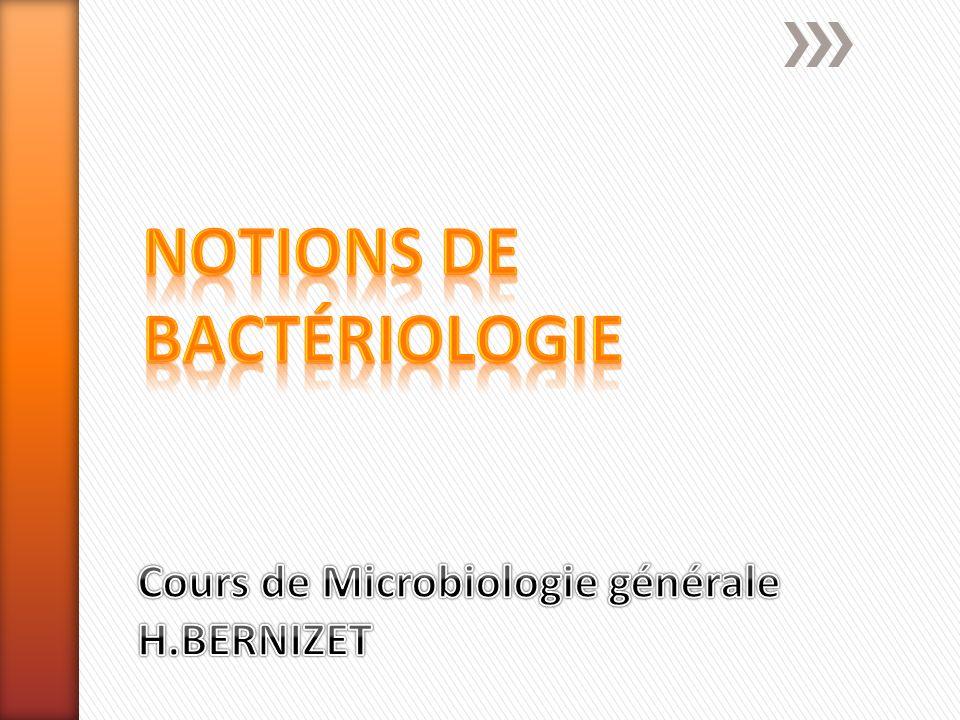 Taille de 1 à 10 µm Toutefois, certains spirochètes peuvent atteindre 500 micromètres Les mycoplasmes ne dépassent guère 0.1 micromètre Coques Bacilles ou coccobacilles