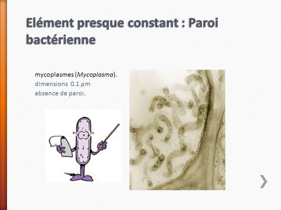 mycoplasmes (Mycoplasma). dimensions 0.1 m absence de paroi.