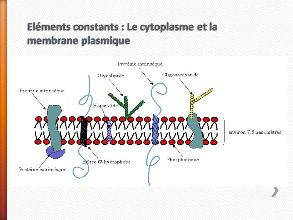 Quels sont les différents rôles assurés par la membrane plasmique chez les bactéries ?