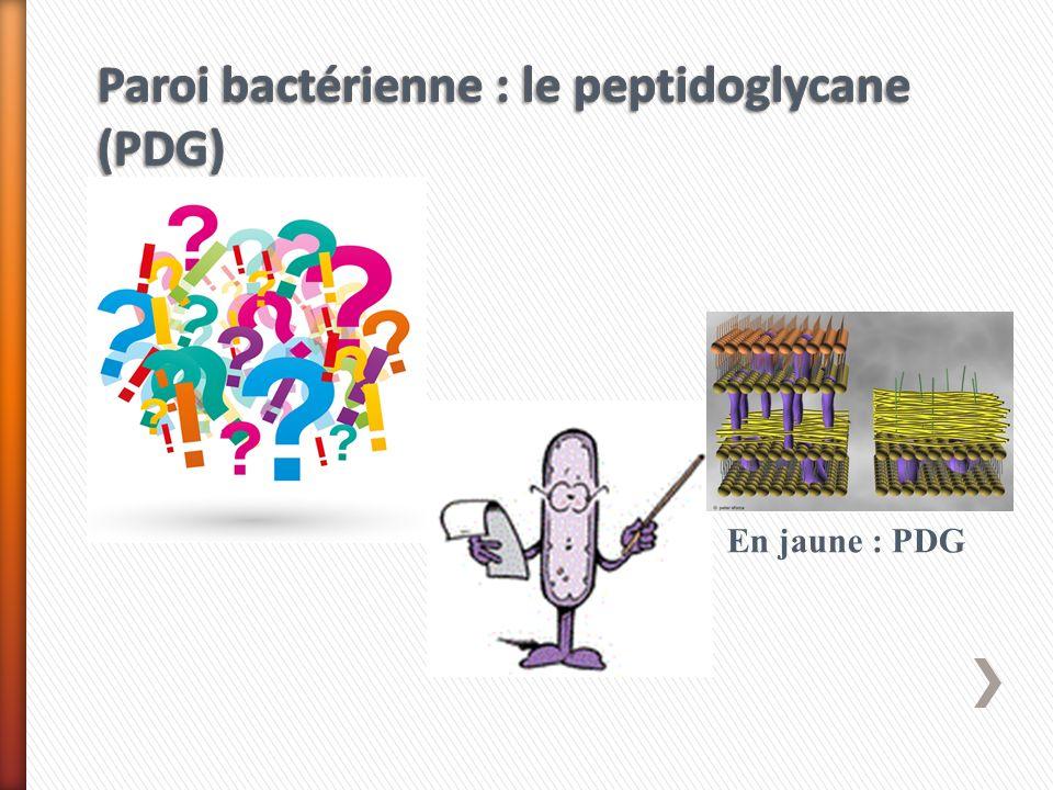 Le PDG peut différer par la nature des acides aminés et le nombre des ponts interpeptidiques.