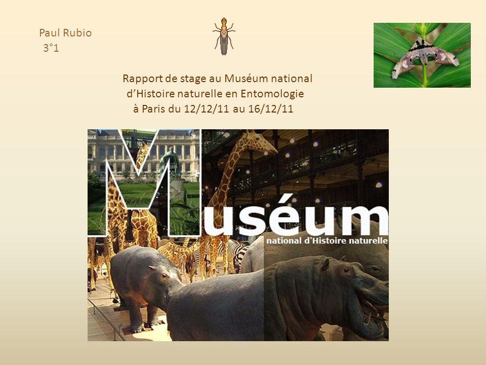 Paul Rubio 3°1 Rapport de stage au Muséum national dHistoire naturelle à Paris du 12/12/11 au 16/12/11 en Entomologie