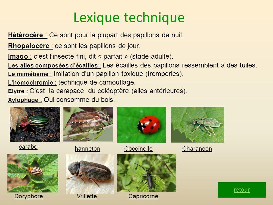 Lexique technique Hétérocère : Ce sont pour la plupart des papillons de nuit. Rhopalocère : ce sont les papillons de jour. retour Imago : cest linsect