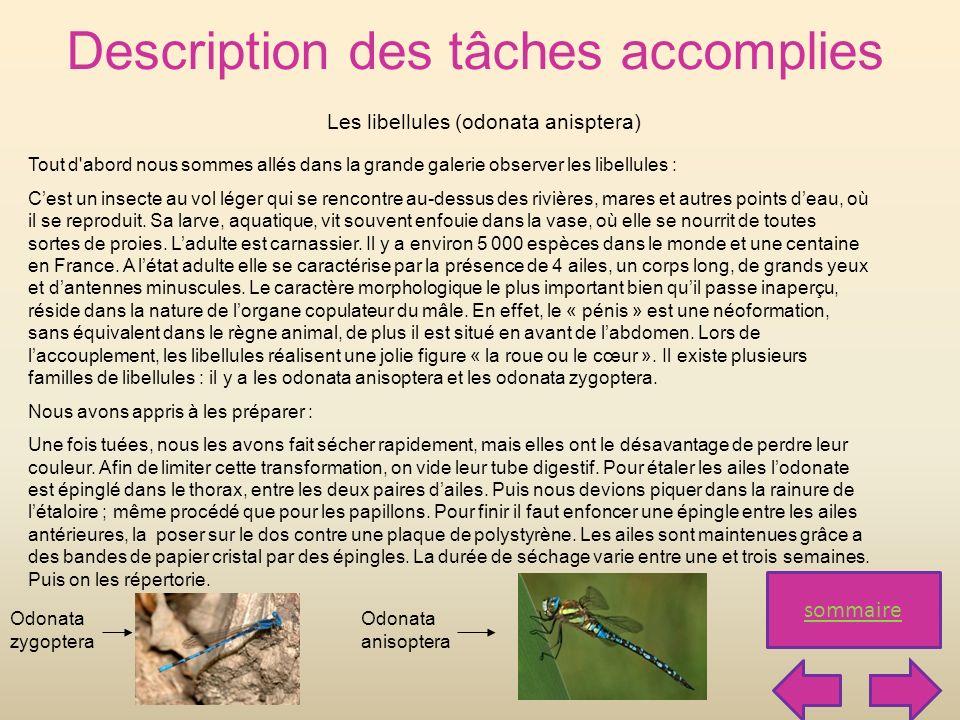 Description des tâches accomplies sommaire Les libellules (odonata anisptera) Tout d'abord nous sommes allés dans la grande galerie observer les libel