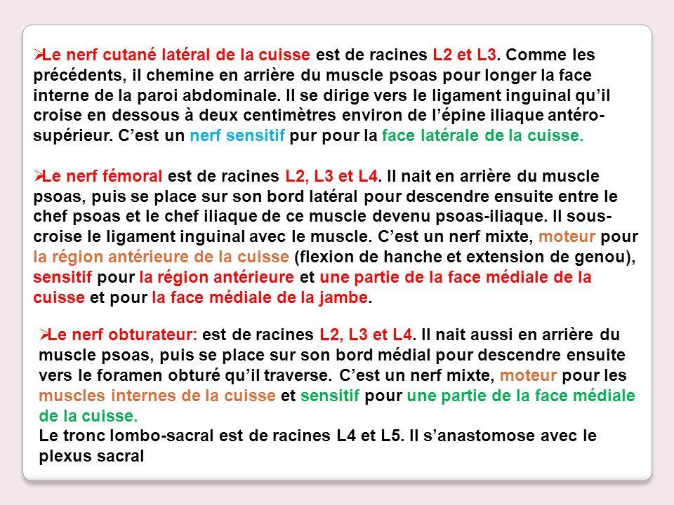 Le nerf cutané latéral de la cuisse est de racines L2 et L3. Comme les précédents, il chemine en arrière du muscle psoas pour longer la face interne d