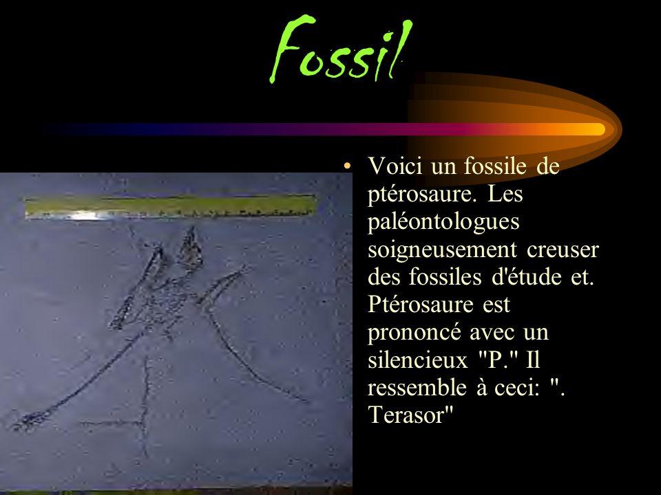 What did he step in ? Pas tous les fossiles d'ossements qui se sont tournés vers la roche. Certains fossiles sont l'empreinte que les animaux laissés